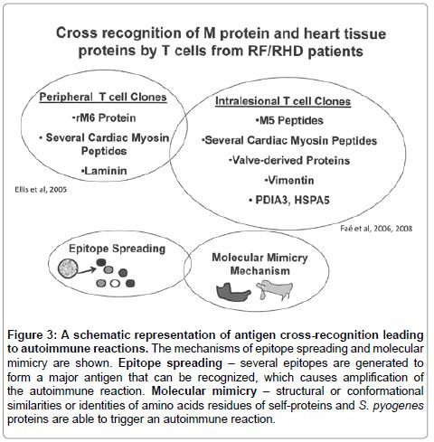 rheumatology-current-mechanisms-epitope