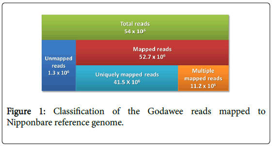 rice-research-Godawee-reads