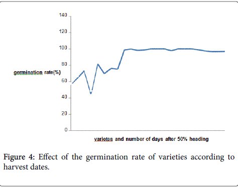 rice-research-germination-rate