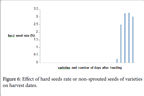 rice-research-hard-seeds