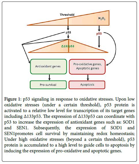 single-cell-signaling-response-oxidative-stresses