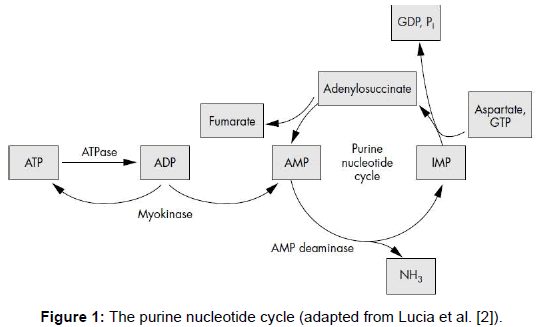 sports-medicine-doping-studies-purine-nucleotide-cycle