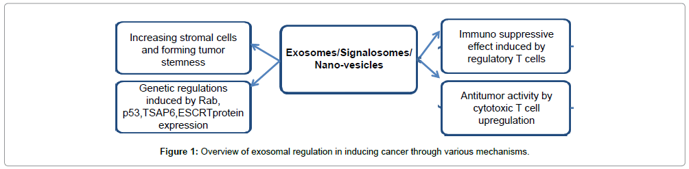 stem-cell-research-exosomal-regulation
