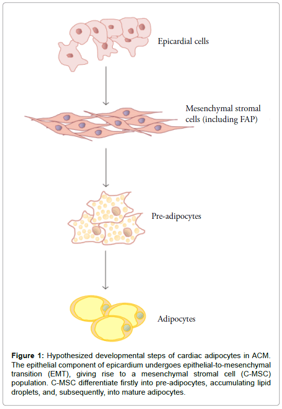 stem-cell-research-therapy-Hypothesized-developmental