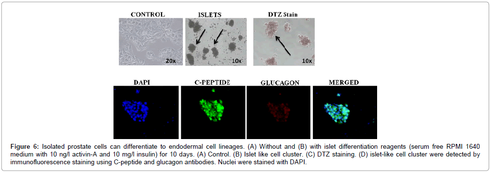 stem-cell-research-therapy-differentiation-reagents