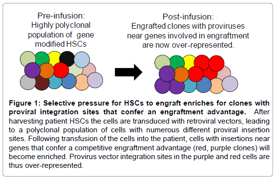 stem-cell-research-therapy-engraft-enriches