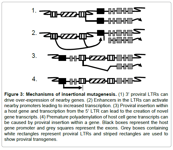stem-cell-research-therapy-insertional-mutagenesis