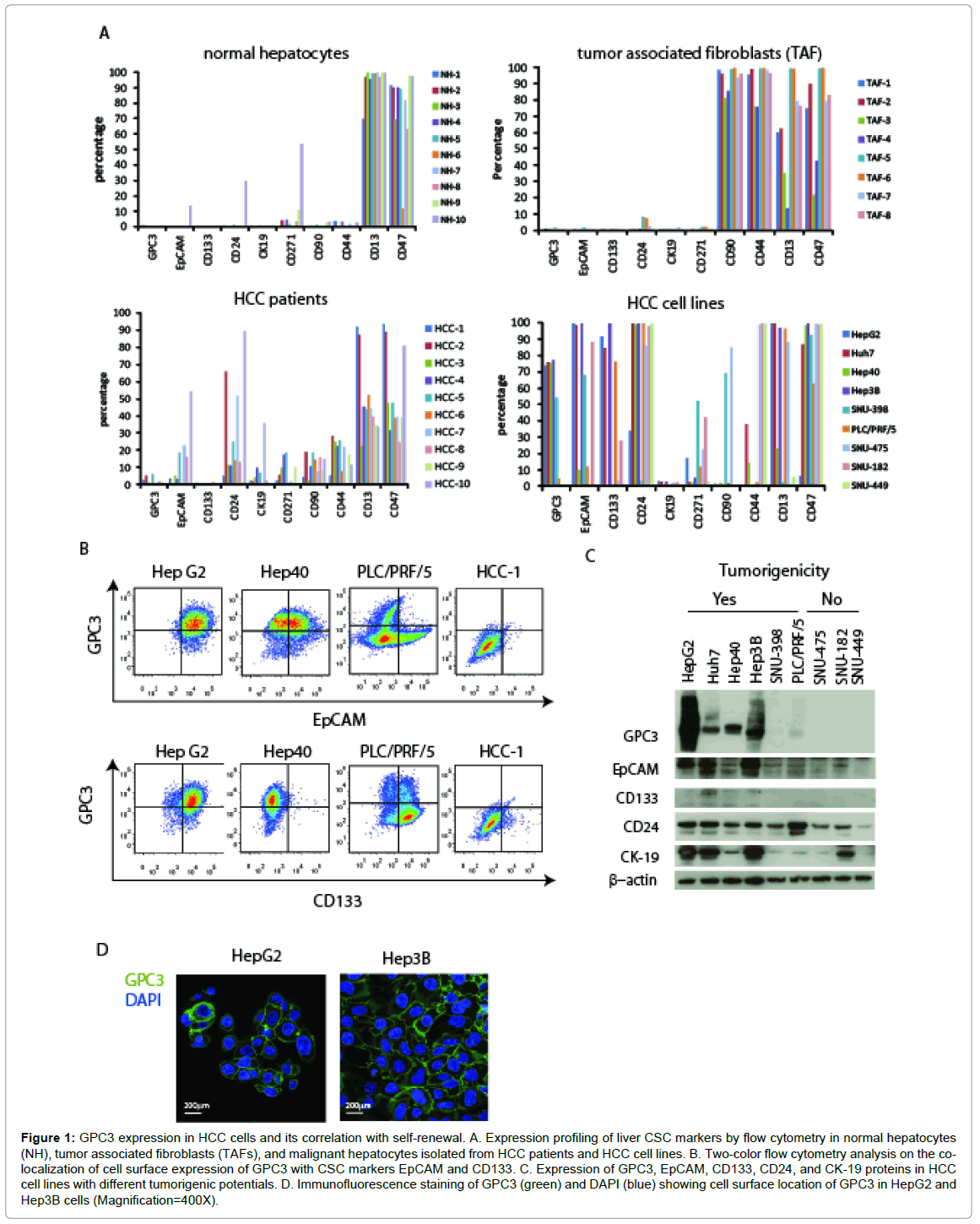 stem-cell-research-therapy-tumor-associated-fibroblasts