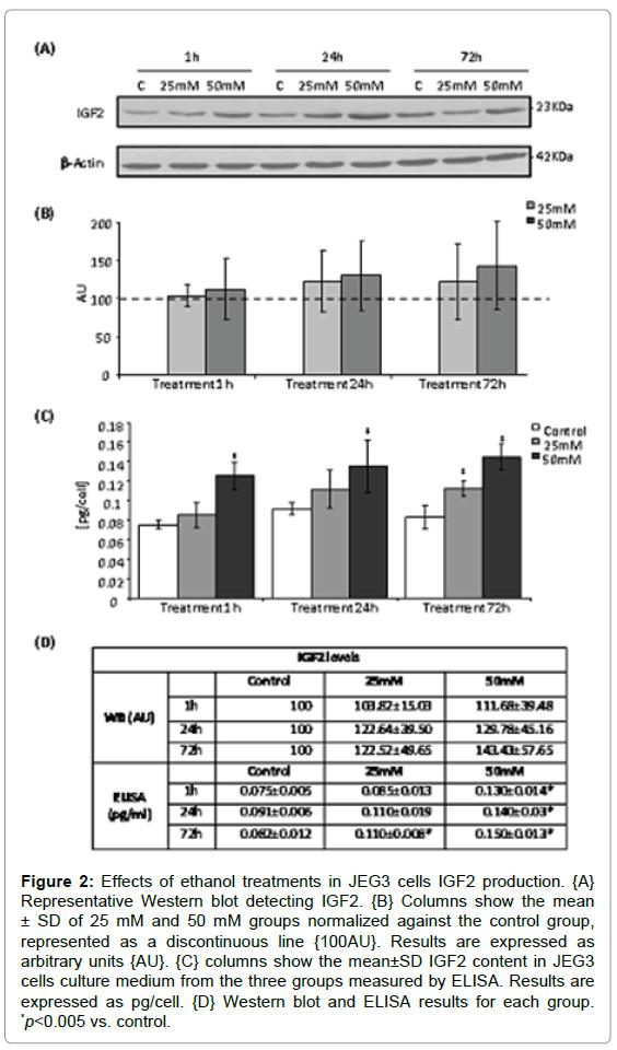 steroids-hormonal-science-JEG3-cells-IGF2-production