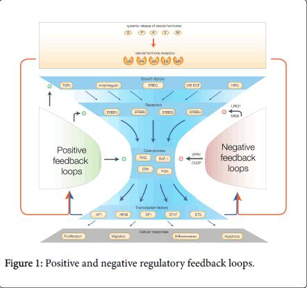 steroids-hormonal-science-feedback-loops