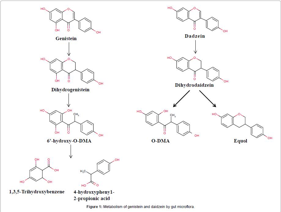 steroids-hormonal-science-gut-microflora