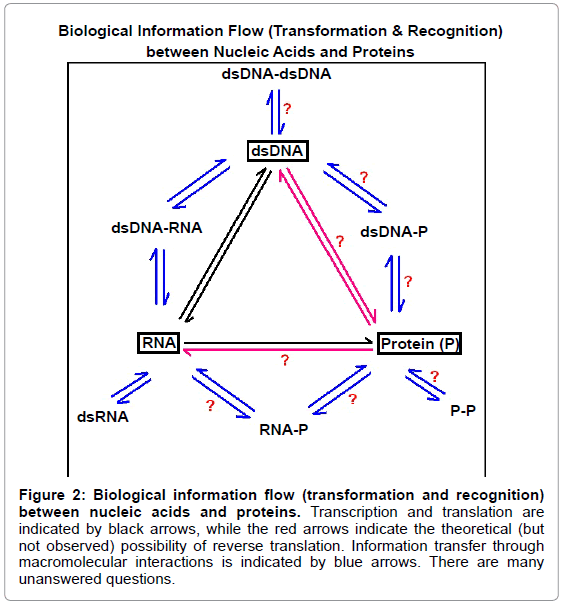 theoretical-computational-science-Transcription-indicated-arrows