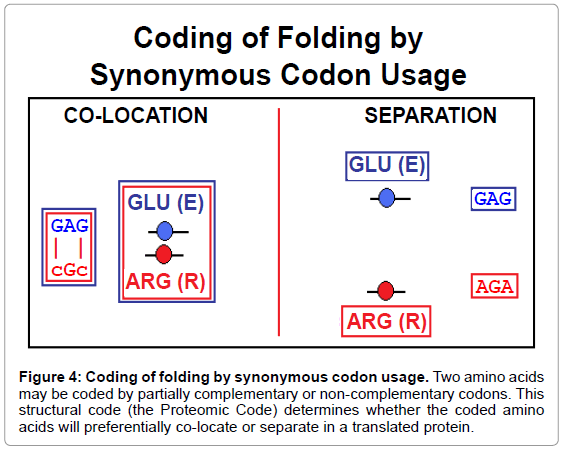 theoretical-computational-science-synonymous-complementary-codons