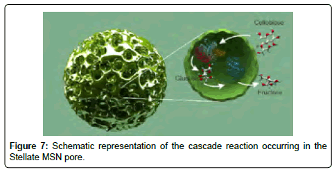 thermodynamics-catalysis-cascade-reaction