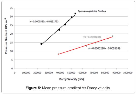 tissue-science-engineering-Darcy-velocity