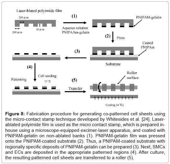 tissue-science-engineering-Fabrication-procedure