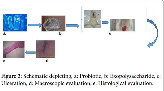 tissue-science-engineering-Probiotic-Exopolysaccharide