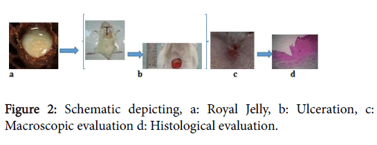 tissue-science-engineering-Royal-Jelly