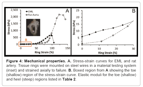 tissue-science-engineering-Stress-strain-curves
