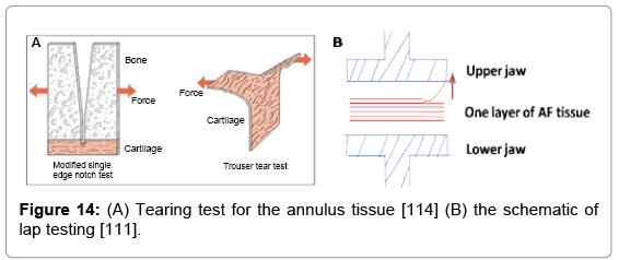 tissue-science-engineering-Tearing-test