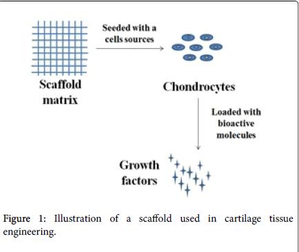 tissue-science-engineering-cartilage-tissue