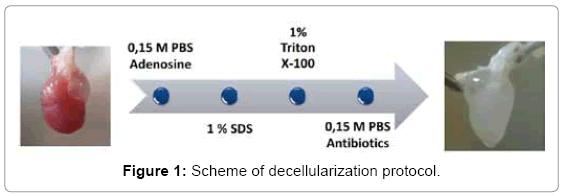 tissue-science-engineering-decellularization