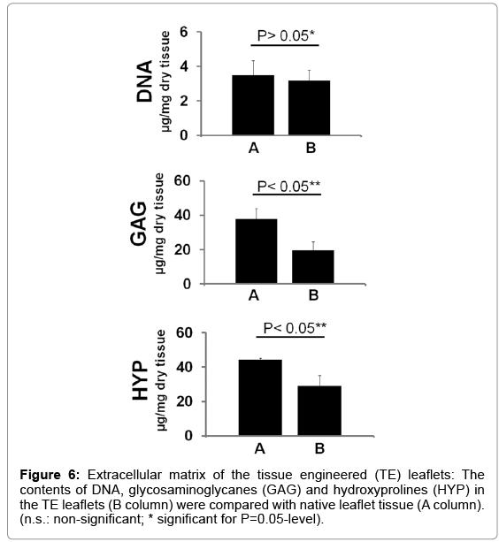 tissue-science-engineering-glycosaminoglycanes