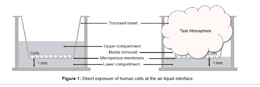 tissue-science-engineering-human-cells