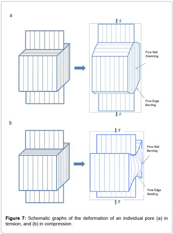 tissue-science-engineering-individual-pore