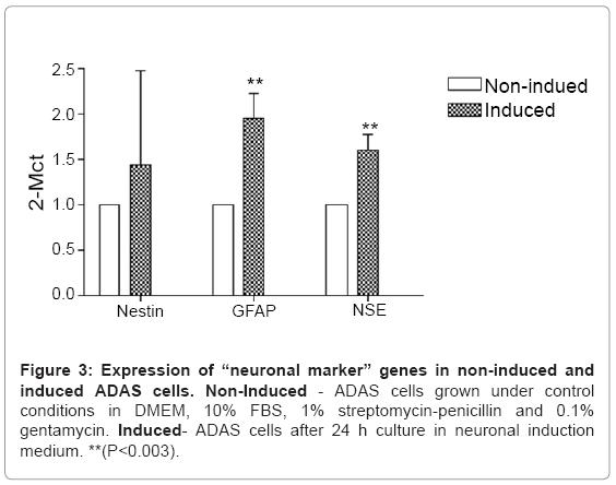 tissue-science-engineering-neuronal-marker