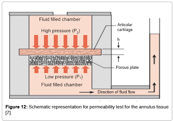 tissue-science-engineering-permeability-test