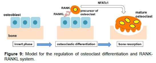 tissue-science-engineering-regulation-osteoclast