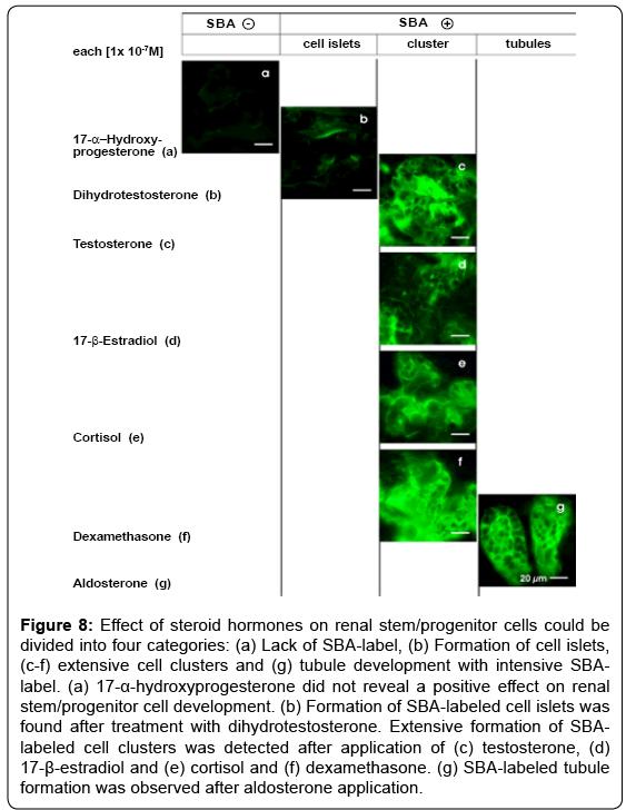 tissue-science-engineering-steroid-hormones