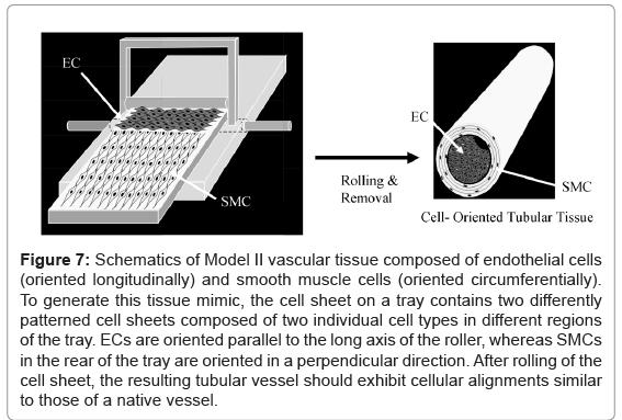 tissue-science-engineering-vascular-tissue