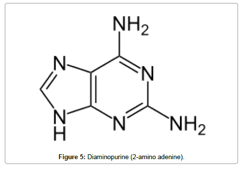 transcriptomics-Diaminopurine