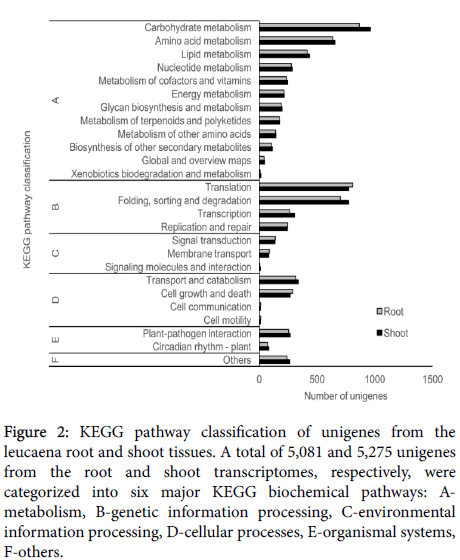 transcriptomics-pathway-classification-unigenes-leucaena