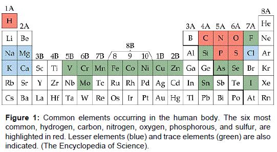 translational-medicine-human-oxygen-phosphorous