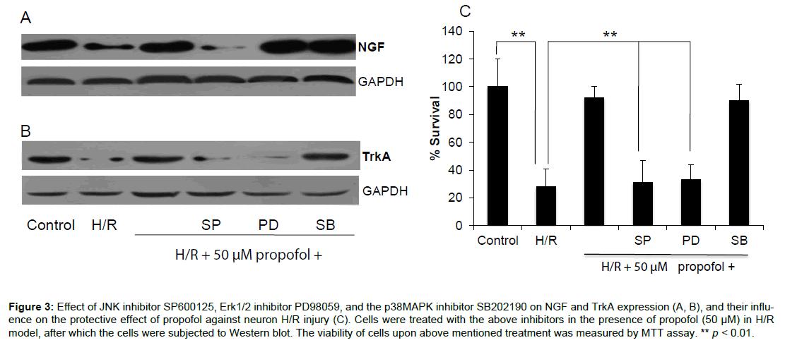 translational-medicine-inhibitor-protective-neuron