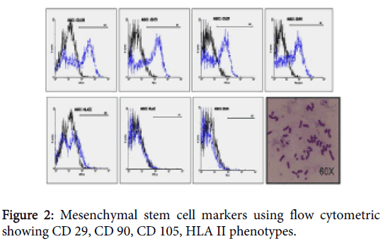 transplantation-technologies-research-mesenchymal-markers-cytometric
