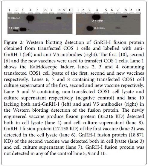 vaccines-vaccination-blotting-detection