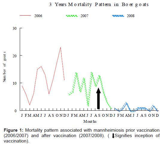 vaccines-vaccination-mannheimiosis-prior
