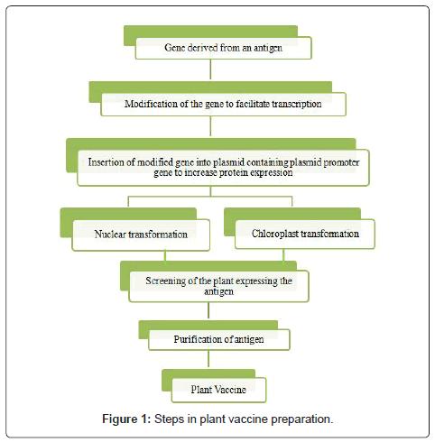 vaccines-vaccination-plant-vaccine