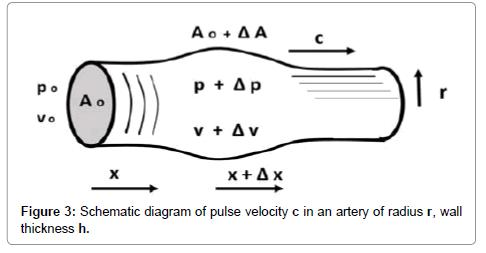 vascular-medicine-surgery-pulse