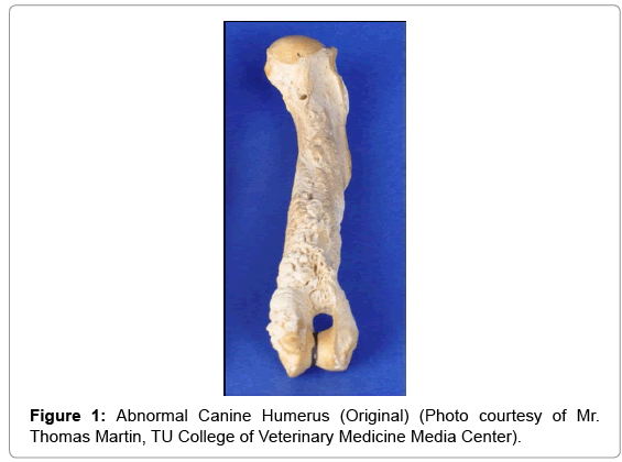veterinary-science-technology-Abnormal-Canine-Humerus