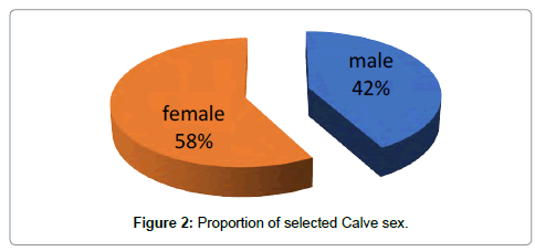 veterinary-science-technology-Calve-sex