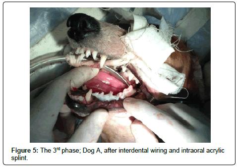veterinary-science-technology-Dog-interdental-wiring