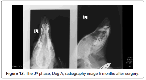 veterinary-science-technology-Dog-radiography-image-6-months-after-surgery