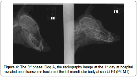 veterinary-science-technology-Dog-radiography-image