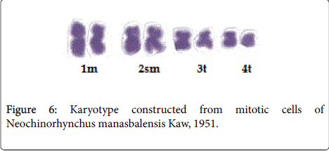 veterinary-science-technology-Karyotype-constructed