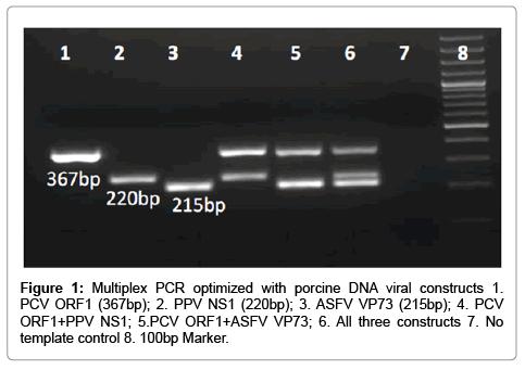 veterinary-science-technology-Multiplex-optimized-porcine